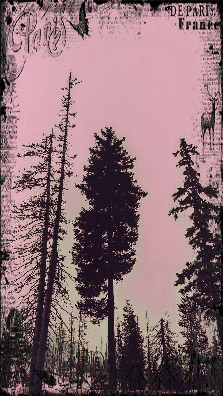 🌸🌷 Pastel Power 🌸🌷 Paris, France  Eye4photography  EyeEm Trees This Week On Eyeem Eyeem Mother Nature Shades Of Nature Shades Of The Sky Shades Of Sky Eyeem Clouds And Sky Pastel Colors Treescapes Shades Of Pink EyeEm Best Shots - Nature Trees In Winter Pink Sky Vintage Filter EyeEm Tree Collection EyeEm Worthy EyeEm Gallery Soft Pastel