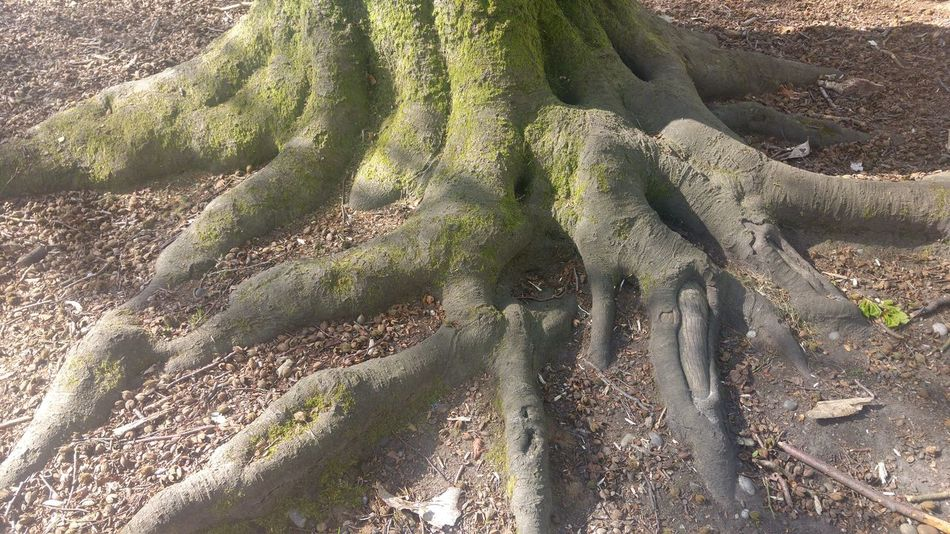 Day Effects Of Erosion Exposed Roots Growth High Angle View Landscape Nature No People Outdoors Roots Shadow Sunlight Tree