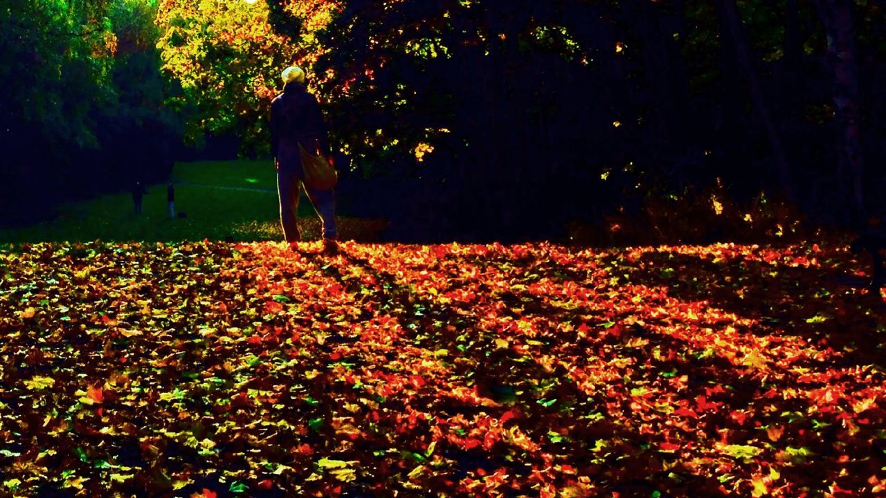 IPhoneography Mobilephotography Eye4photography  Showcase: November Autumn Leaves Autumn Colors Autumn Leaves Nature People Watching Sunset Pattern Pieces