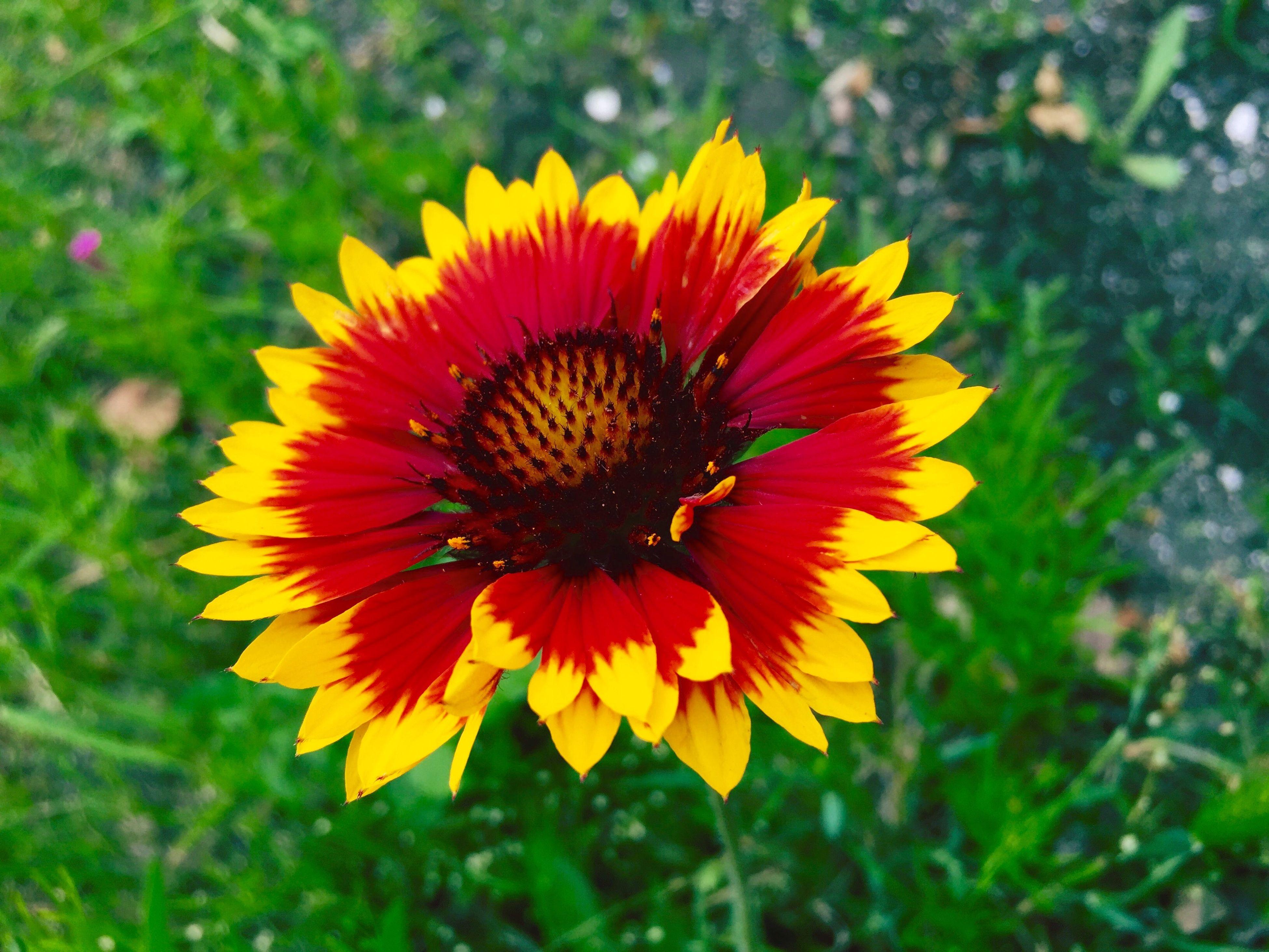 蔵の隣の空き地に咲いている花。 花の名前が・・・ちと判らん……