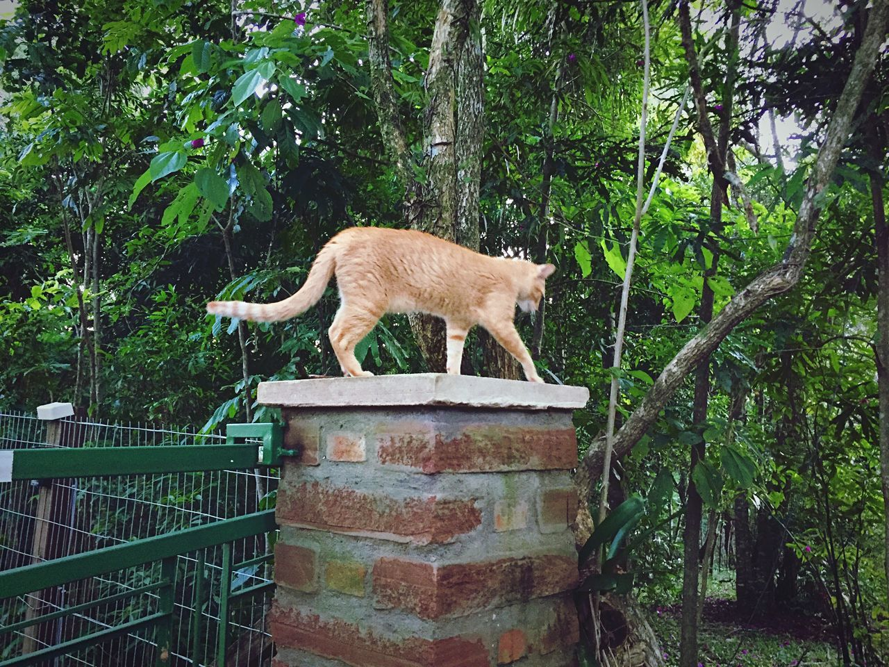 Low Angle View Of Cat By Gate Against Trees
