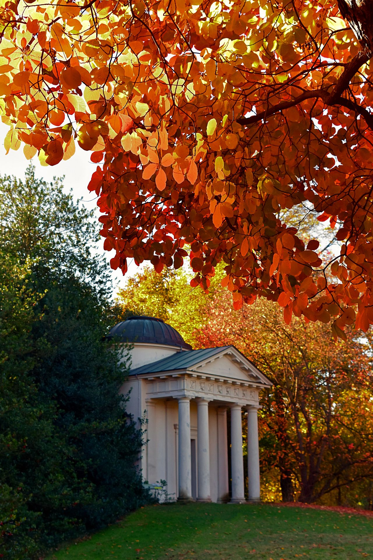 Wonderful autumn colours captured by Just Jules of i-2-i Photography. Architecture Autumn Autumn Collection Autumn Colors Autumn Leaves Autumnbeauty Kew Garden Kew Gardens Kew Gardens, London Leaf Nature Orange Color Travel Destinations Tree