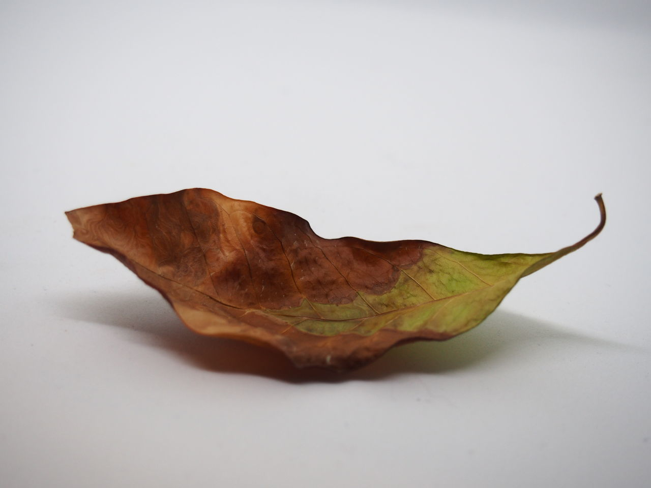 Close-up Crumpled Dried Fruit Fragility Leaf Leaves No People Studio Photography Studio Shot White Background