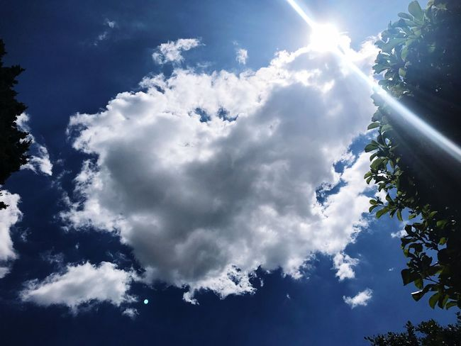 Sky Cloud - Sky Nature Beauty In Nature Sunbeam Sun No People Low Angle View Day Sunlight Tranquility Scenics Backgrounds Outdoors