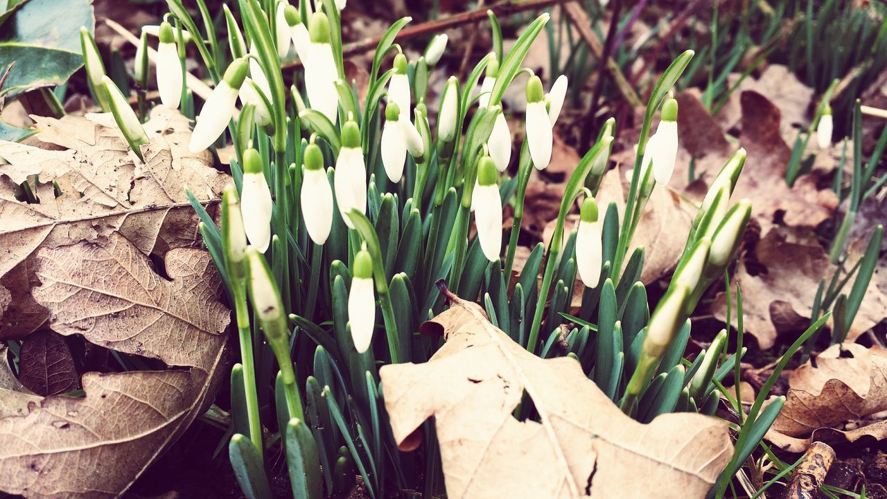 Flower Spring Is Coming  EyeEm Nature Lover First Pic Of 2015