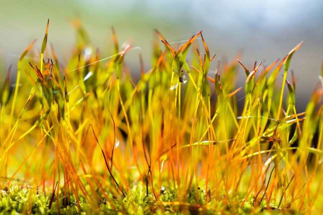 Throwback: I took this shot in early spring... Moss Mossy Close-up Day Nature Nature_collection Outdoors Macro Macro_collection Macro Nature Nature On Your Doorstep Green Color Beauty In Nature Plant Plants 🌱 Spider Silk Focus On Foreground Growth Freshness Fragility Microcosm Nikon Germany Fine Art Photography Colour Of Life