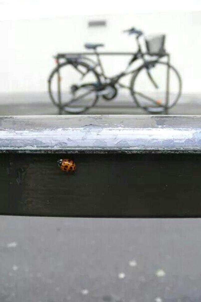 Paris Coccinelle Bug Toinou Le Cadre Se Fait Tout Seul Catch Eye
