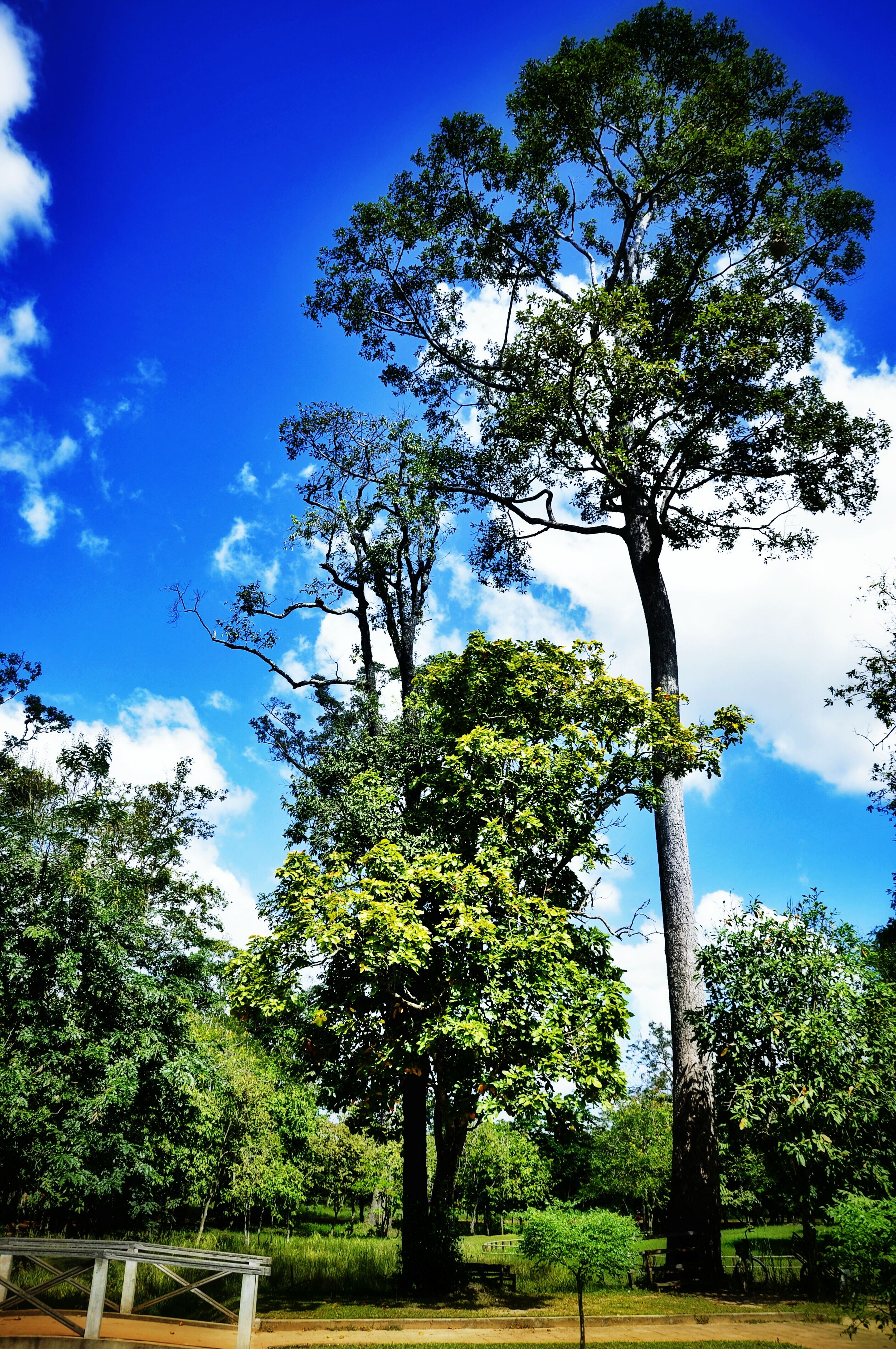 tree, blue, green color, sky, low angle view, growth, built structure, branch, sunlight, nature, green, architecture, day, clear sky, building exterior, no people, tree trunk, cloud, tranquility, outdoors