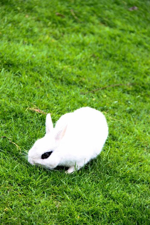 Hase Kaninchen Rabbit Rasen Gras  Grün Lemon Lime By Motorola Pets Corner Nature On Your Doorstep Happy Easter!
