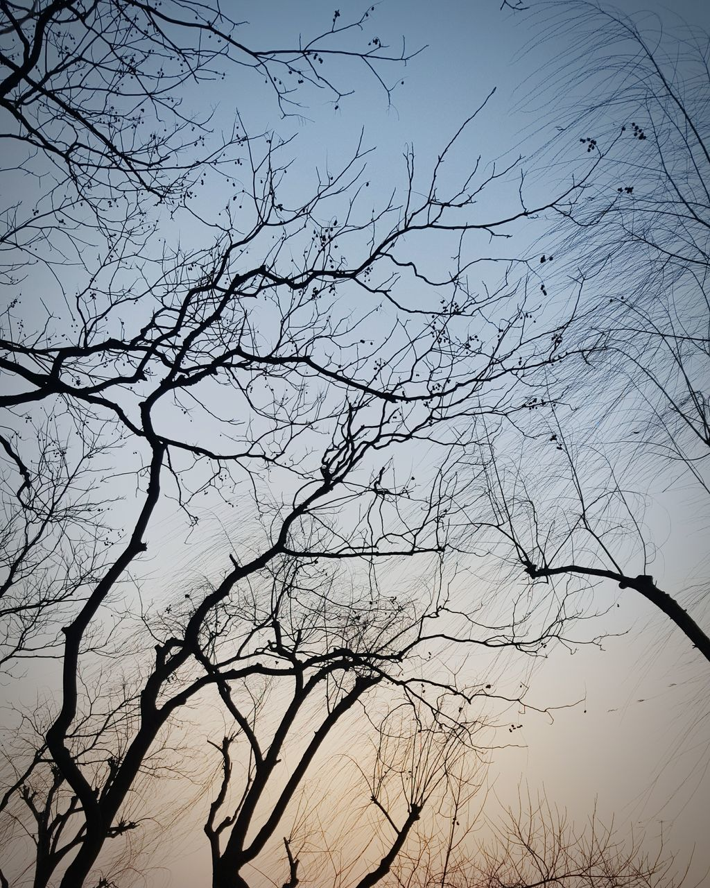 bare tree, branch, nature, beauty in nature, no people, silhouette, low angle view, outdoors, tranquility, tree, sky, scenics, day, clear sky, bird