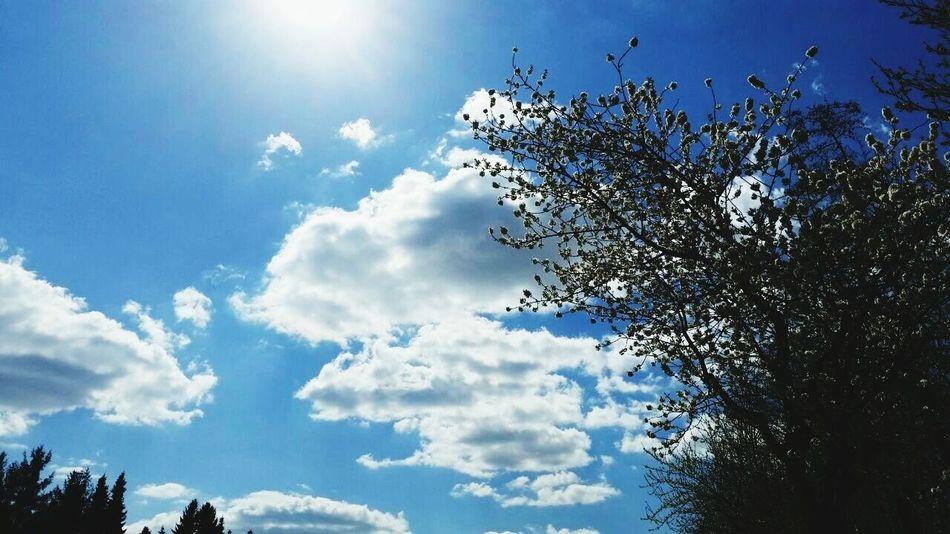 Simple Photography EyeEmBestPics EyeEm Best Shots - Nature Sunny Day Sun ☀ Cloud And Sky Taking Photos Simple. Nature Photography Enjoying Life