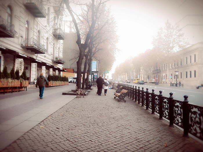 City Tree People Building Exterior Outdoors Adults Only Architecture Adult Sky Day Men Built Structure Tbilisi Loves You City Street Grouvya Groove Tbilisi Georgia City Life Tbilisi Georgia Architecture On The Move City Women