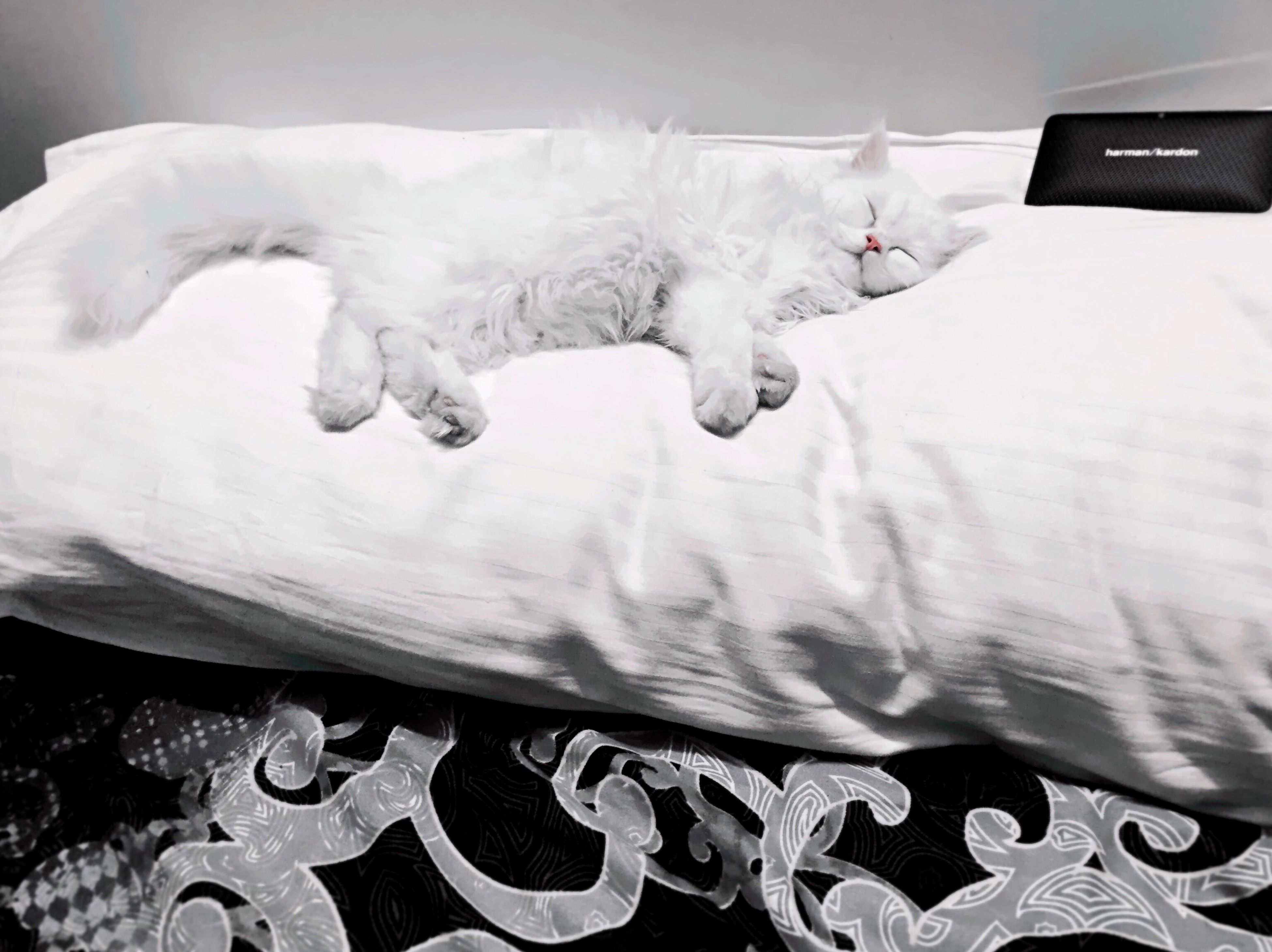 indoors, domestic animals, pets, animal themes, domestic cat, mammal, cat, one animal, relaxation, close-up, feline, no people, high angle view, bed, home interior, white color, sleeping, resting, lying down, eyes closed