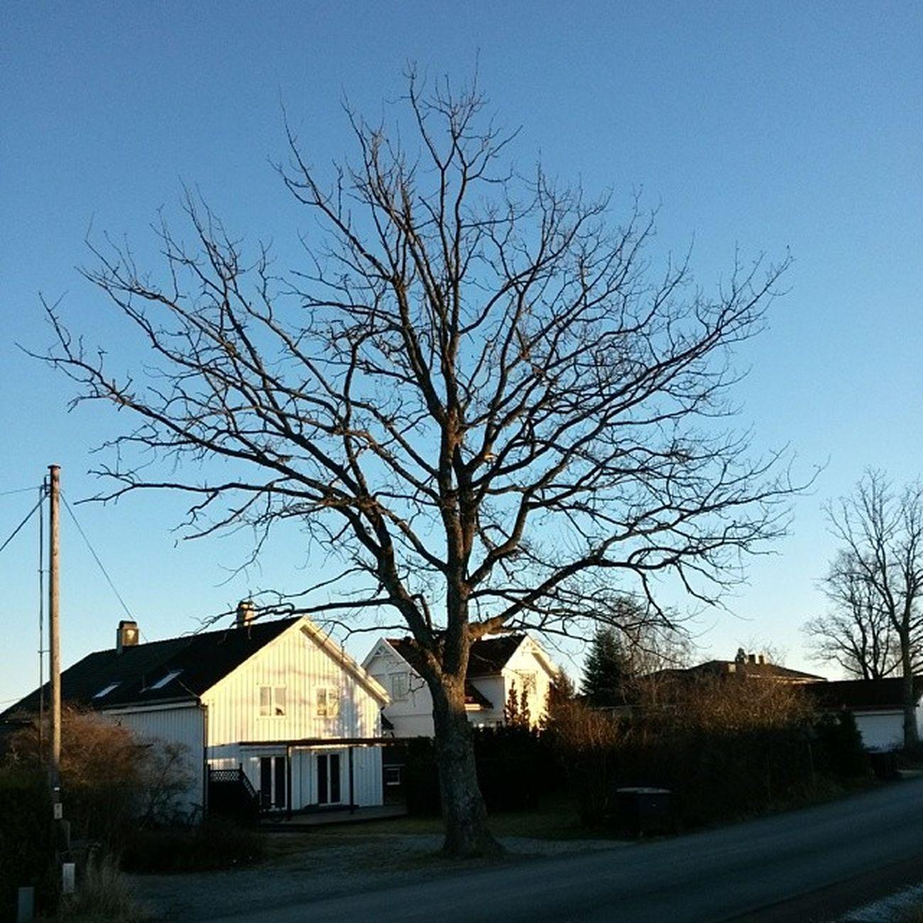 Ilovenorway Ilovenorway_akershus Follo   ås worldunion wu_norway winter sunshine tree tre