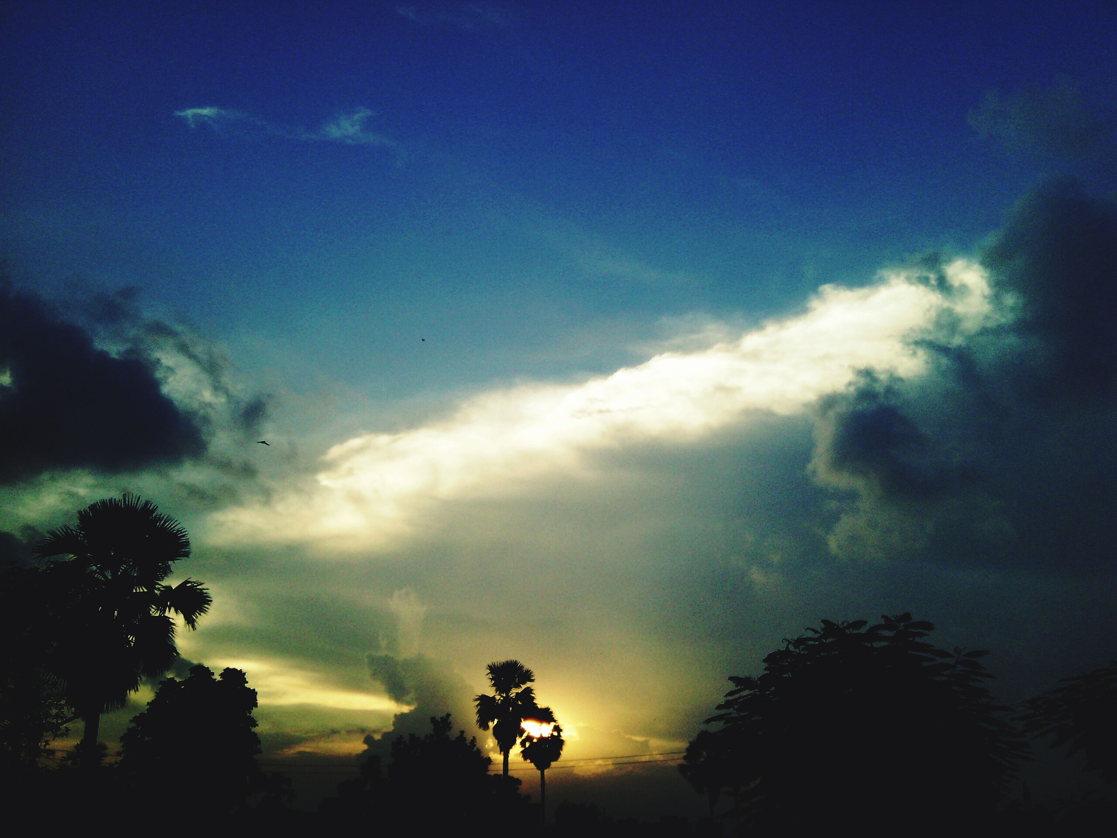 sky, tree, silhouette, cloud - sky, beauty in nature, sunset, low angle view, tranquility, scenics, tranquil scene, nature, growth, cloudy, cloud, idyllic, dramatic sky, outdoors, dusk, no people, blue