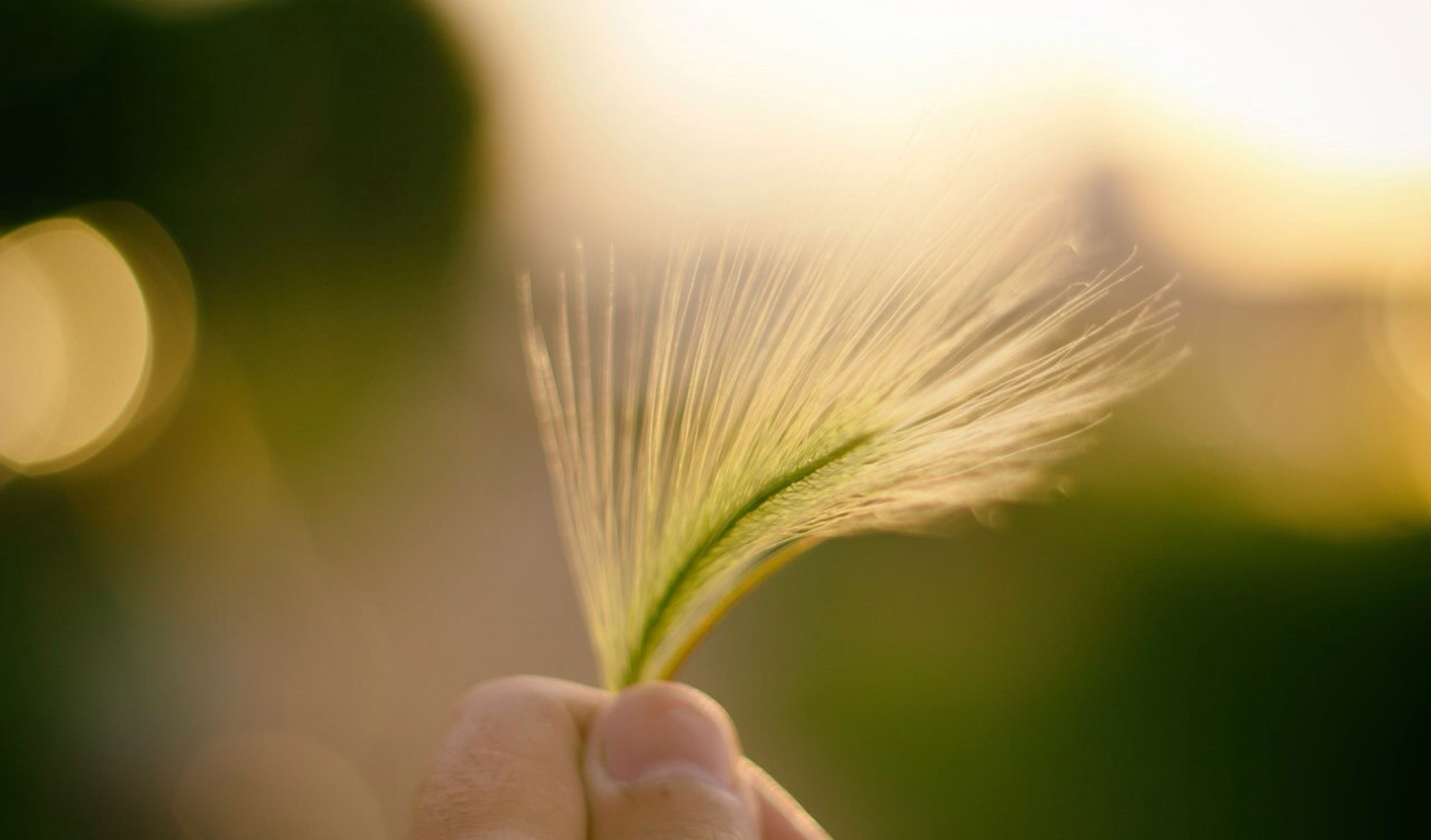 person, focus on foreground, close-up, part of, holding, cropped, human finger, nature, growth, flower, fragility, plant, beauty in nature, freshness, selective focus, sun, unrecognizable person