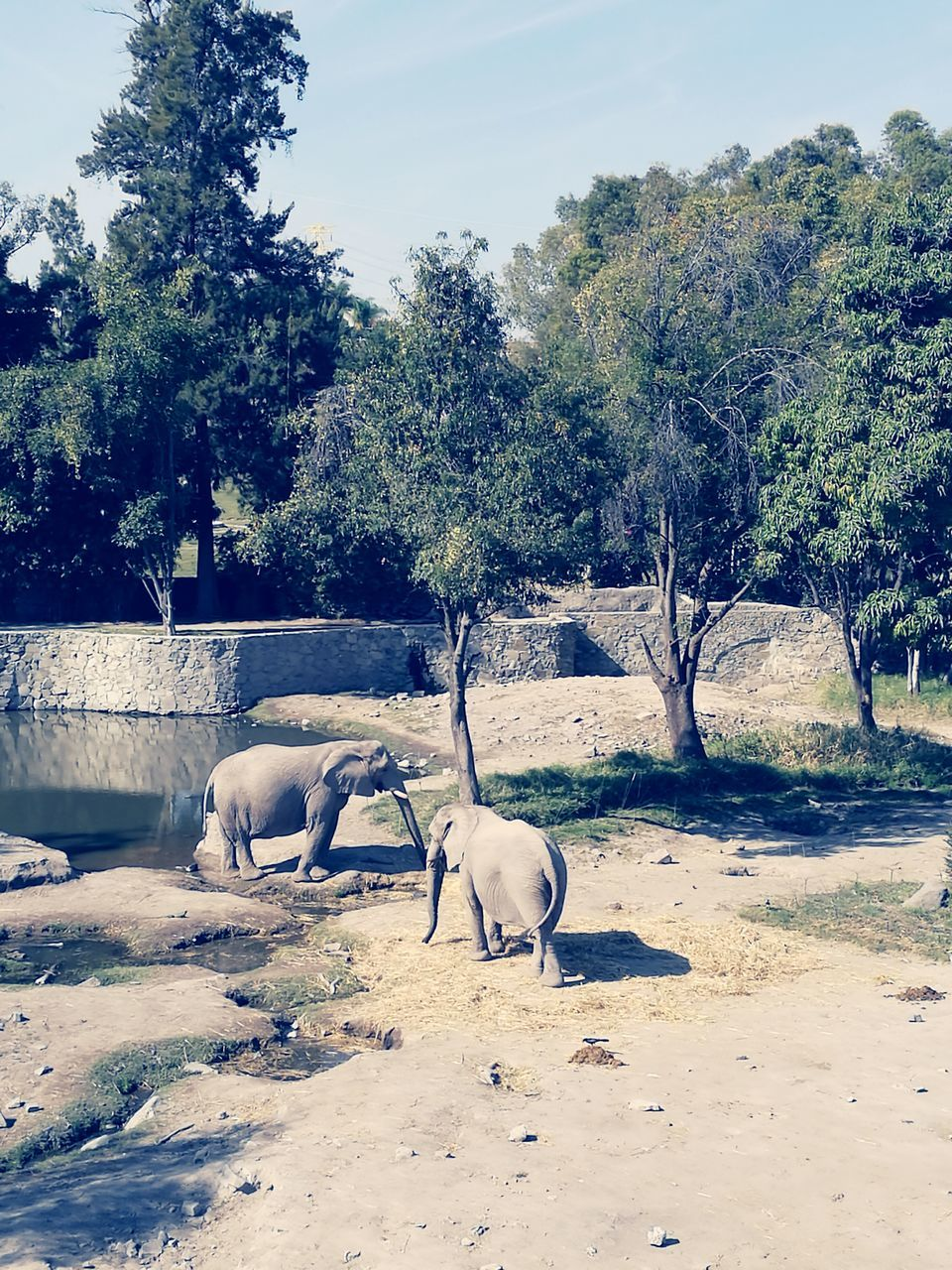 tree, animal themes, mammal, two animals, domestic animals, day, nature, no people, outdoors, young animal, togetherness, beauty in nature, sky