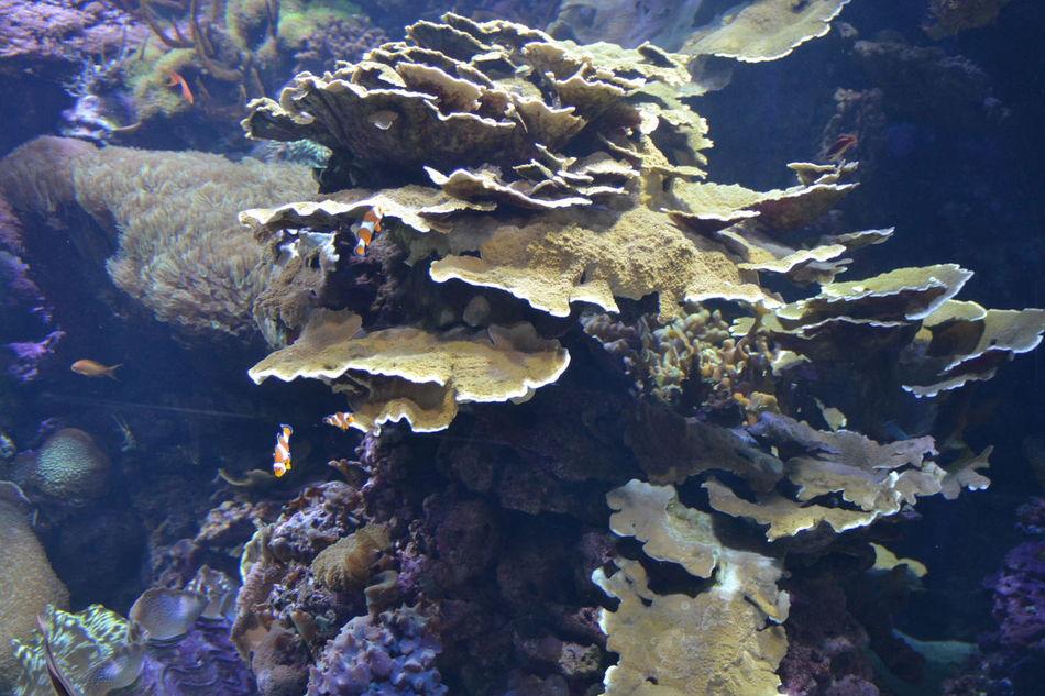 Sea Life No People Coral Underwater Oceanographic Aquarium Photography Animal Tropical Fish Animals In Captivity Multi Colored Aquarium Animal Themes Water Nature Fish Nemo