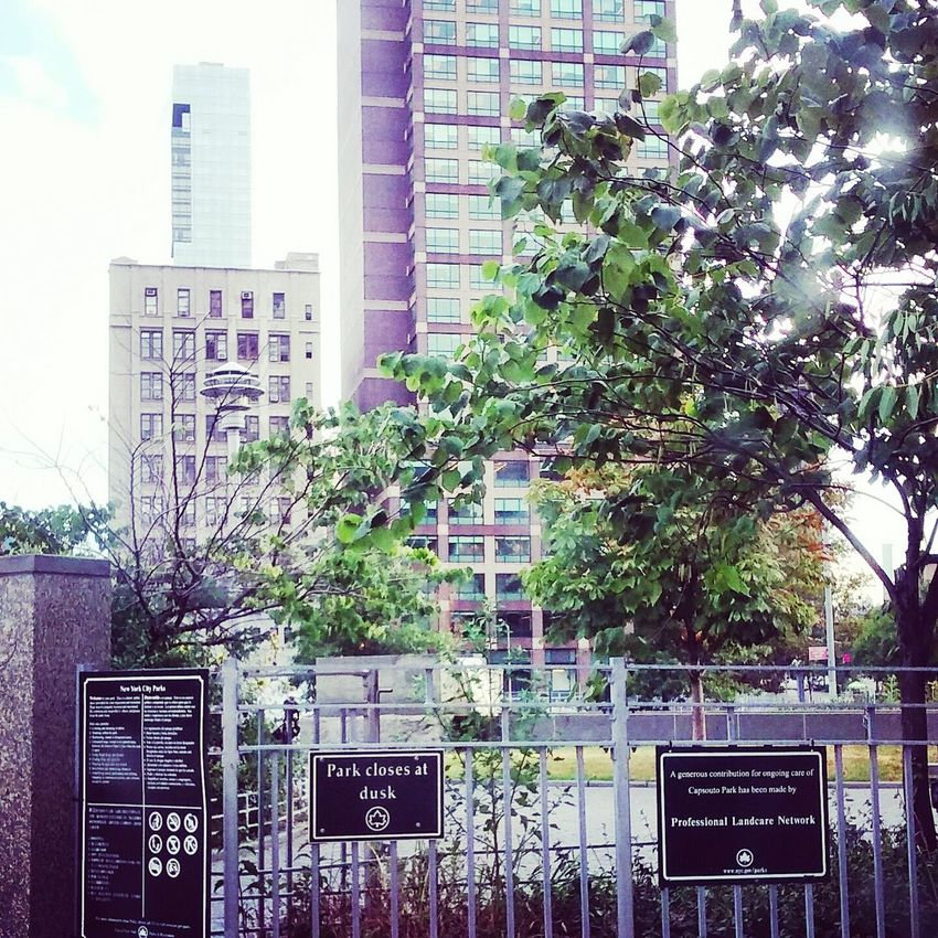Rawphoto  .. Midday Sunlight ... Highrise Commuter Chronicle Commuting. Trees.. Park
