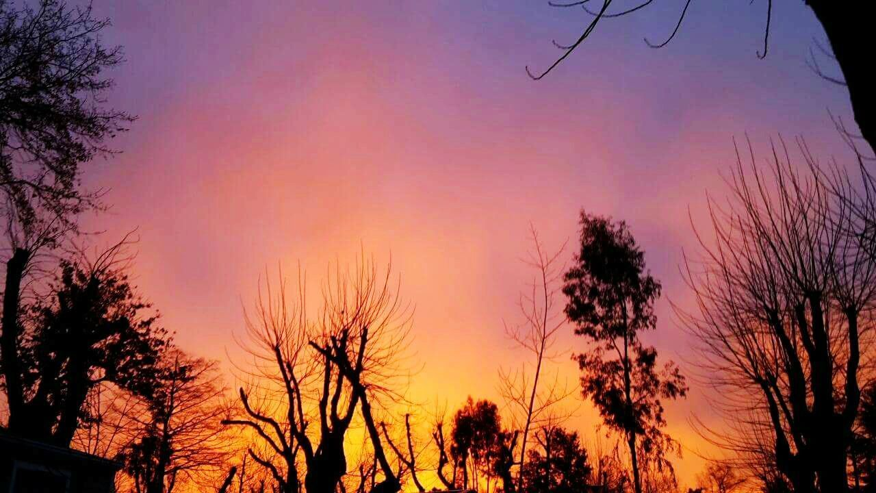 tree, sunset, silhouette, beauty in nature, scenics, nature, no people, outdoors, sky, low angle view, day
