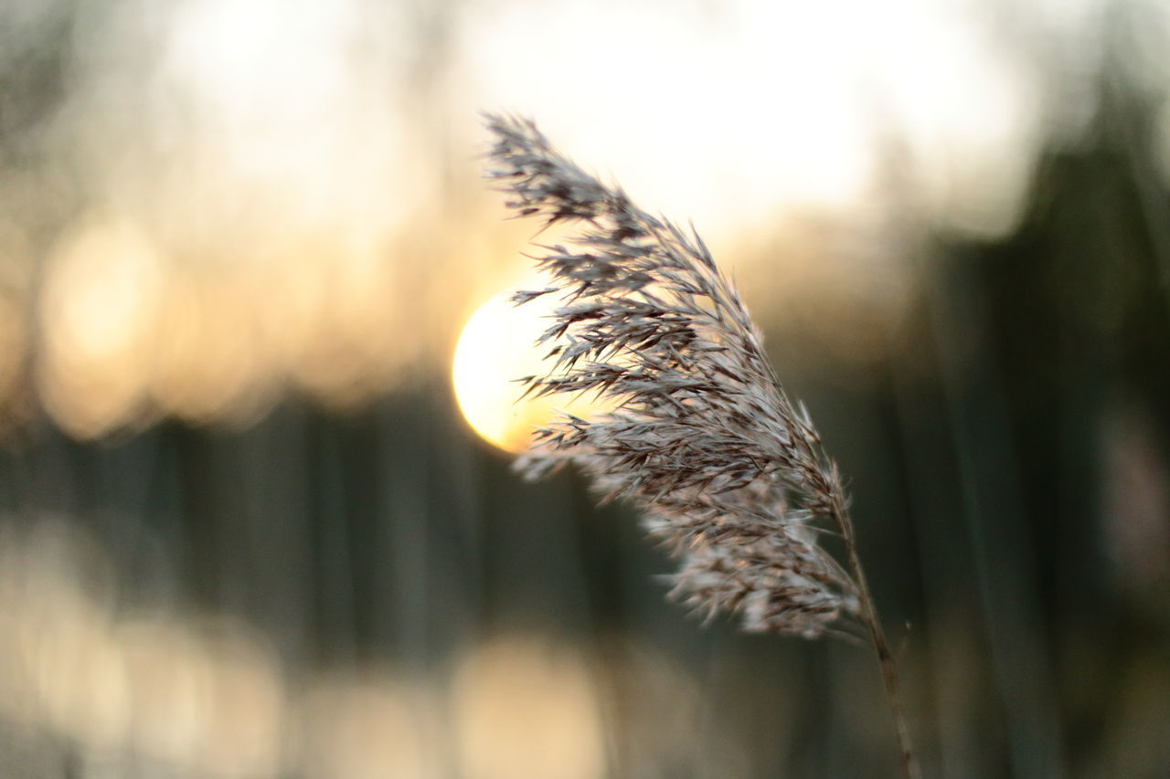 Beauty In Nature Close-up Day Fragility Growth Nature No People Outdoors Plant Reed Thames Tranquility