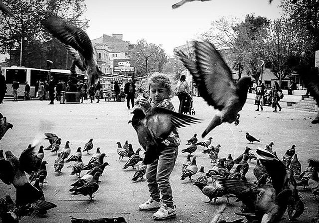 Ben bir an için bir ömür vermeye razıyım. Yeter ki o insanlar değerini bilsin o anların.. İsmail Balı © 2014 Moment An O_an Kid Kids Pigeons Fear Blackandwhite Bw Siyahbeyaz Bendenbirkare Photooftheday Gununkaresi Vscocam Instadaily Followtofollow Followme Originals Nature Nature_perfection Nikontop