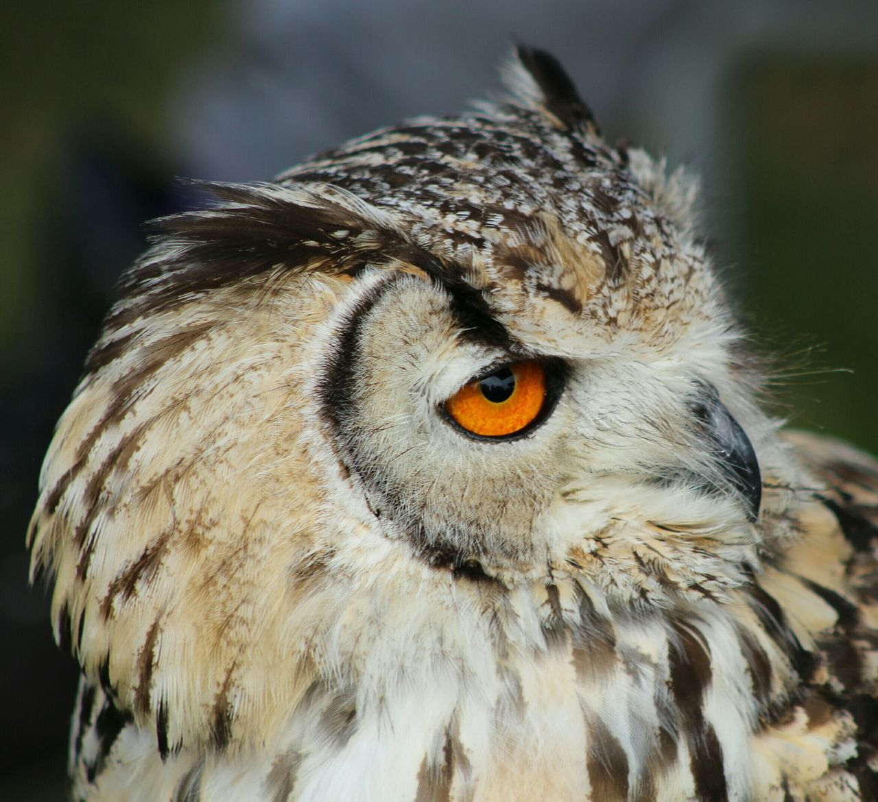Beautiful stock photos of owl, Alertness, Animal, Animal Body Part, Animal Head