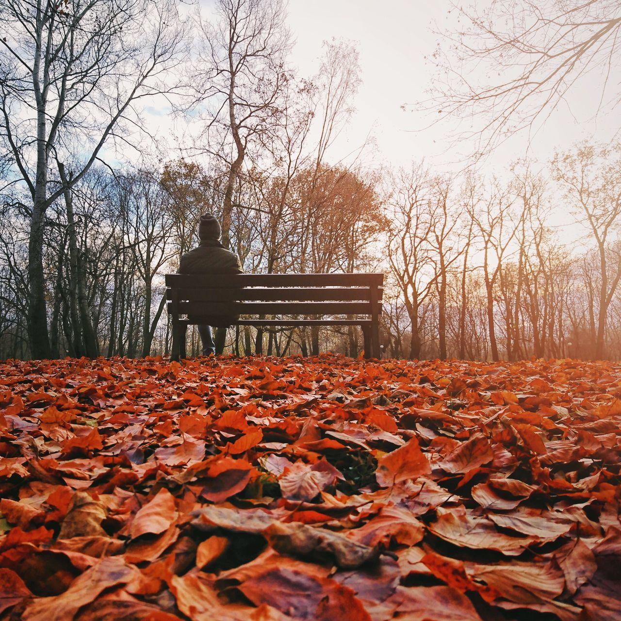 Autumn Fall Leaves Sunny Park Sunset Single Person