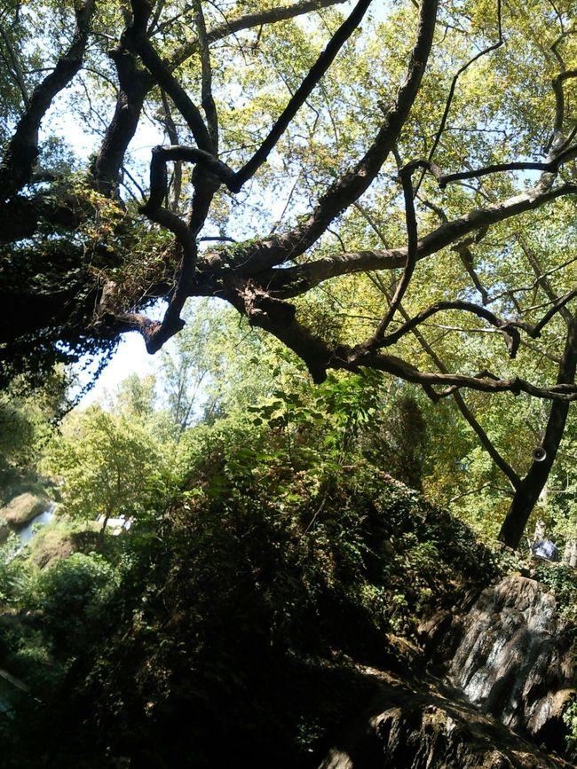 Tree Green Life Birds Düdenpark