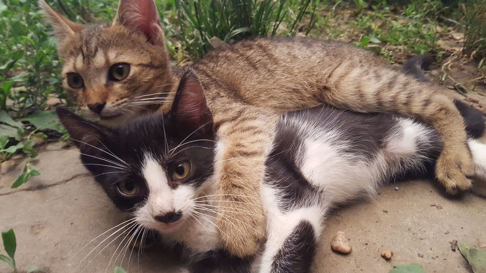 Brother Love Cats Kittys  NoEditNoFilter Play Cute Cute Pets Lovely Kitty Maximum Closeness Adapted To The City