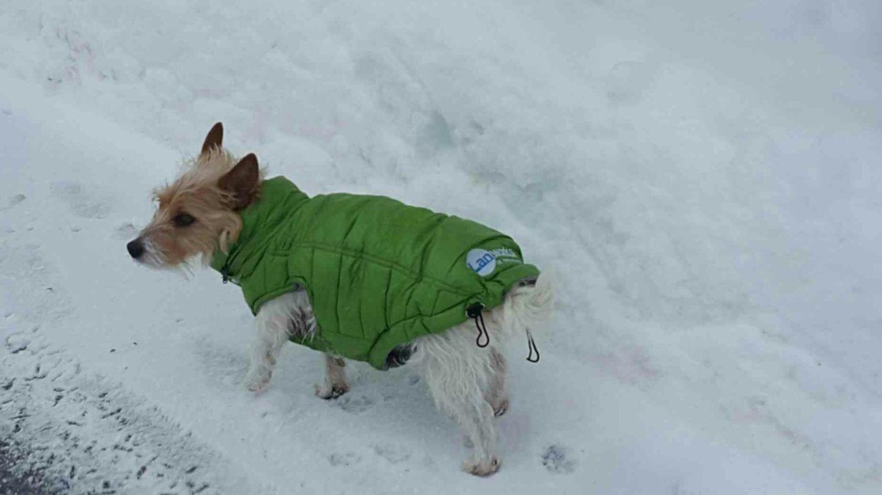 Snow Winter Dog Outdoors