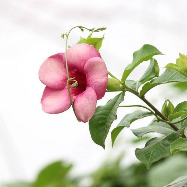 Flower Hybiscus Natur Plantlife Instagram Indian Greengardens India