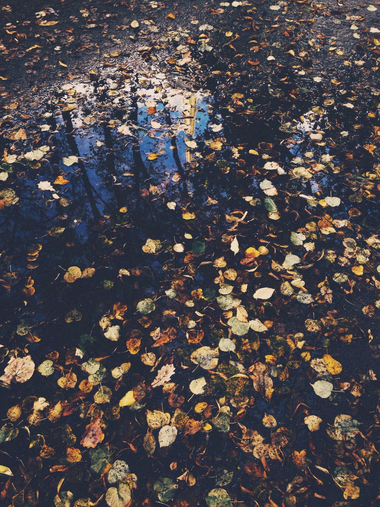 Осенние этюды Autumn Autumnleaves