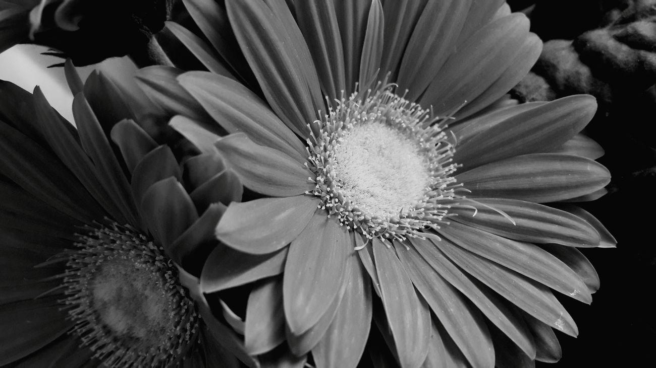 💙🌹EyeEm EyeEm Gallery Samsungphotography Popular Photos Enjoying Life Spring Popular Photography Nastaran Black & White Blackandwhite Photography Spring2015 Flower Flower Photography Flowerporn