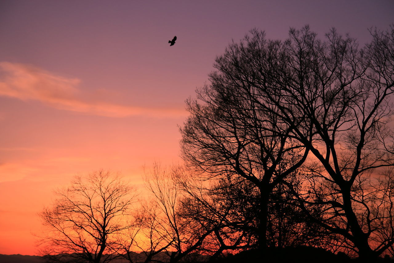 Beauty In Nature Bird Cloud - Sky Flying Hawk Nature No People Outdoors Romantic Sky Scenics Silhouette Sky Sunset The City Light Tranquility Tree