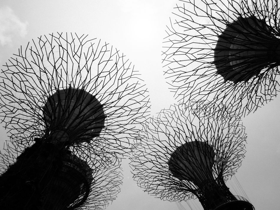 Skytrees Blackandwhite Design Gardens By The Bay Low Angle View No People Pattern Singapore Skytree Tourism