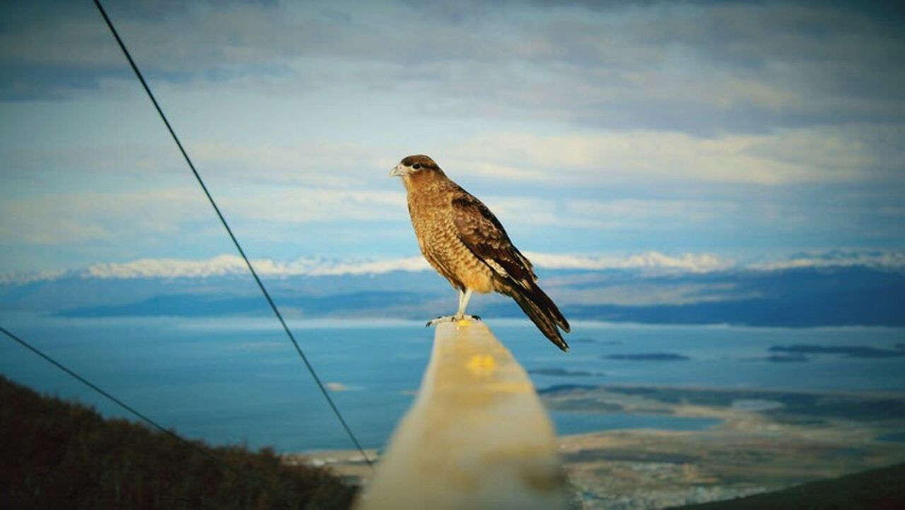 My dream is to fly over the rainbow so high. Bird Animal Themes Nature Animals In The Wild Animal Wildlife Beauty In Nature Outdoors Argentina Patagonia Mountain Backpacker Canon Landscape Canonphotography Glaciar Martial Ushuaïa Eagle