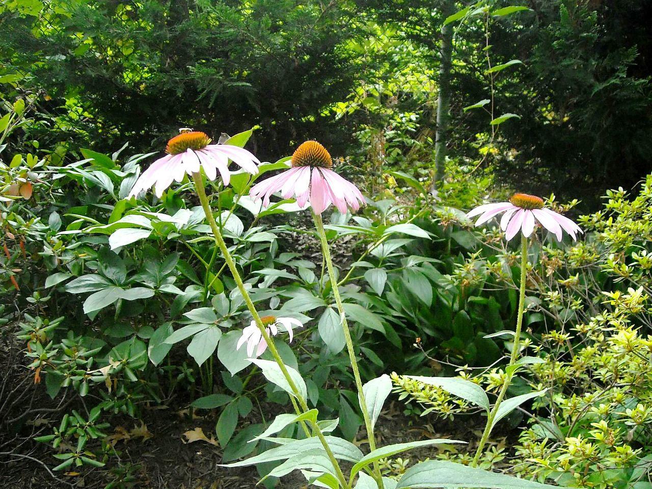 3 Pink Flowers Flowers Pink Pinkflowers Green Greenandpink Leaves 3flowers