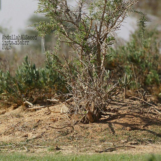 Tree شجر ? شجرة