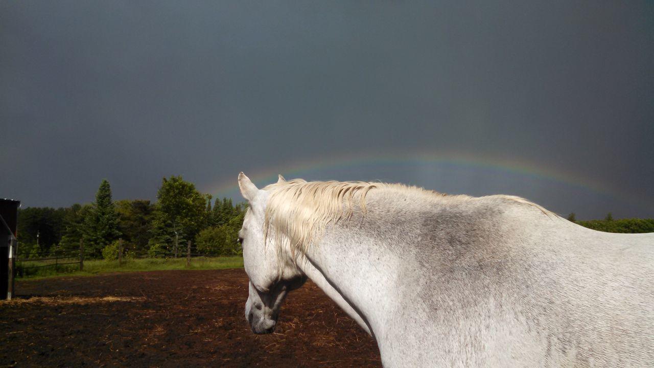 Beautiful stock photos of einhorn,  Arch,  Beauty In Nature,  Cloud - Sky,  Cloudy