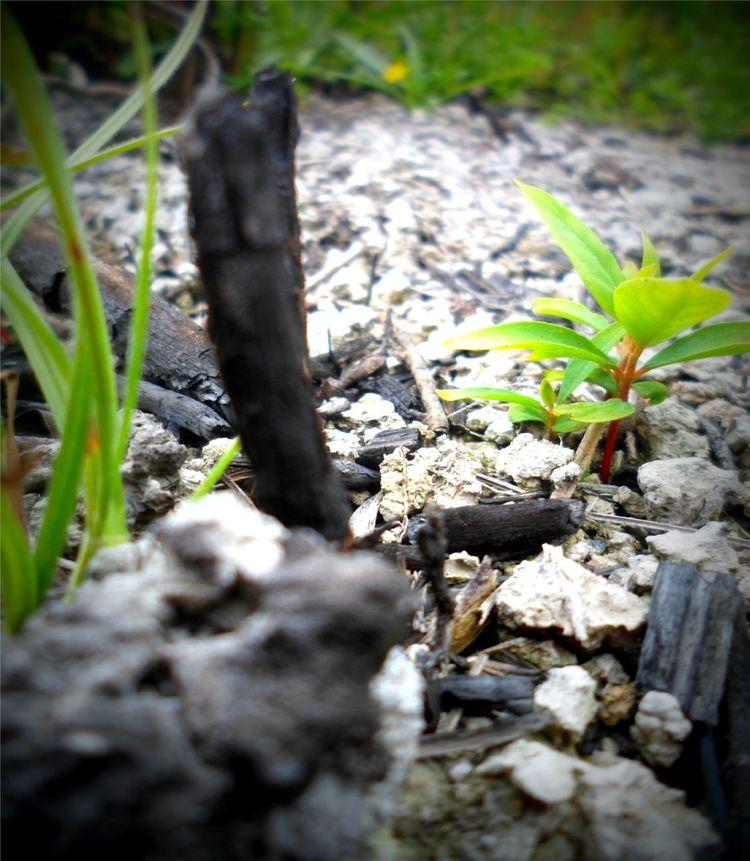 AmericaDoSul Bahia Brasil Carvao Cinza Concientizacao HD Lucasferreiraanjos Meioambiente Nature Plantas Preto Queimada Renascer Renascimento Verde