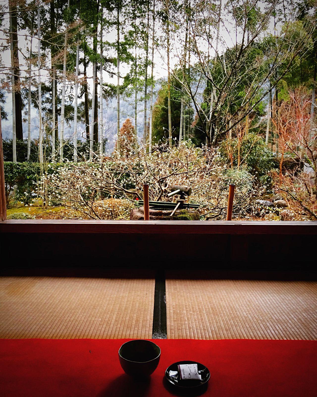 宝泉院 大原 京都 Kyoto Kyoto, Japan Travel Destinations 3XSPUnity Beauty In Nature Hello World Kyoto Garden Enjoying Life Relaxing Japanese Garden