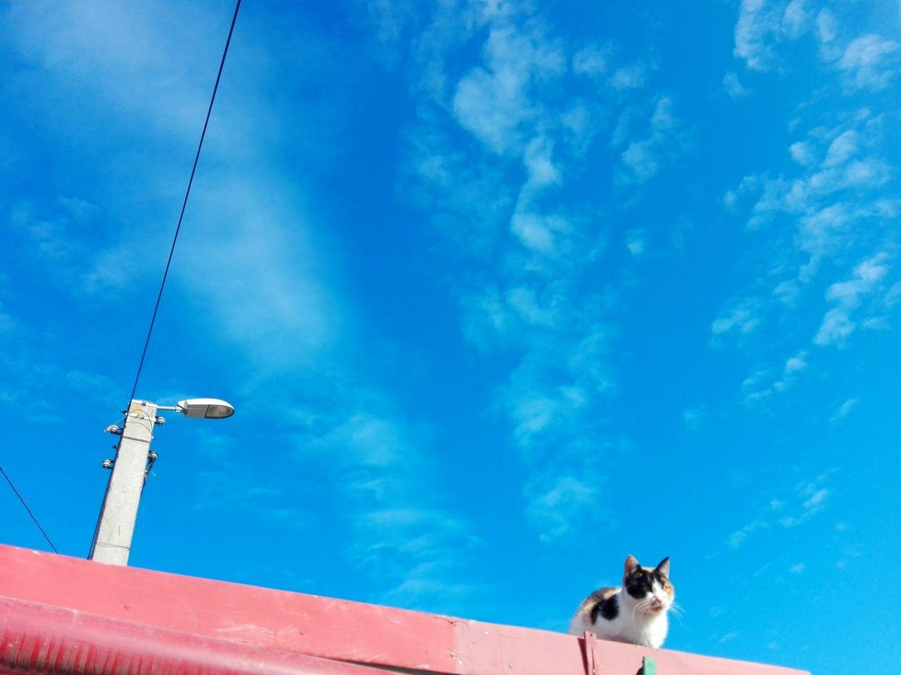 EyeEm Selects Cat On Red Roof Cat Cats Of EyeEm Calico Cat Cat On Rooftop Blue Sky Cat On Rooftop Uppon Blue Sky Wolfzuachis Huawei Photography Ionita Veronica Eyeem Market @WOLFZUACHiV Veronica Ionita Huaweiphotography Wolfzuachiv On Market Edited By @wolfzuachis Roof Red Roof Blue Sky And Clouds Street Lamp Street Lamp Post