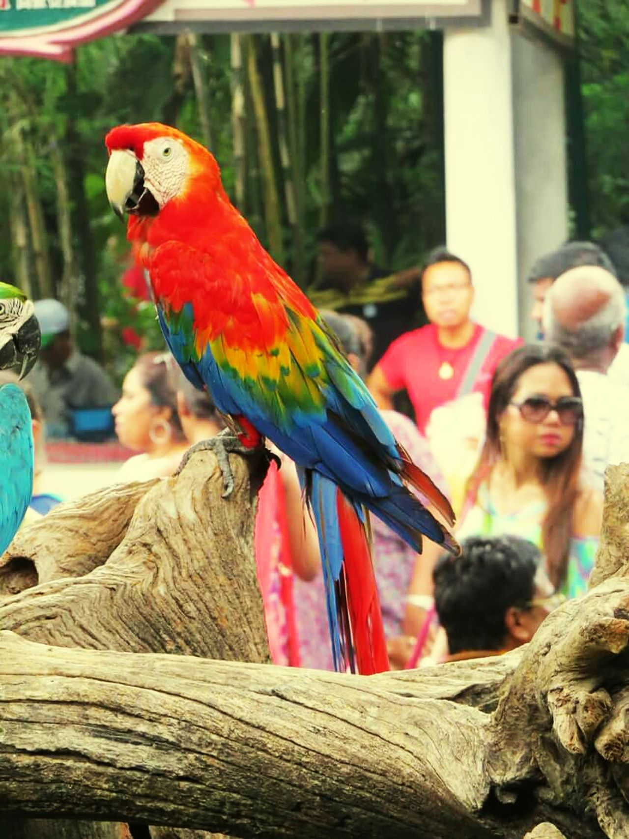 Bird Photography My Photography Bangkok World Safari Travelling Spotted In Thailand Maximum Closeness