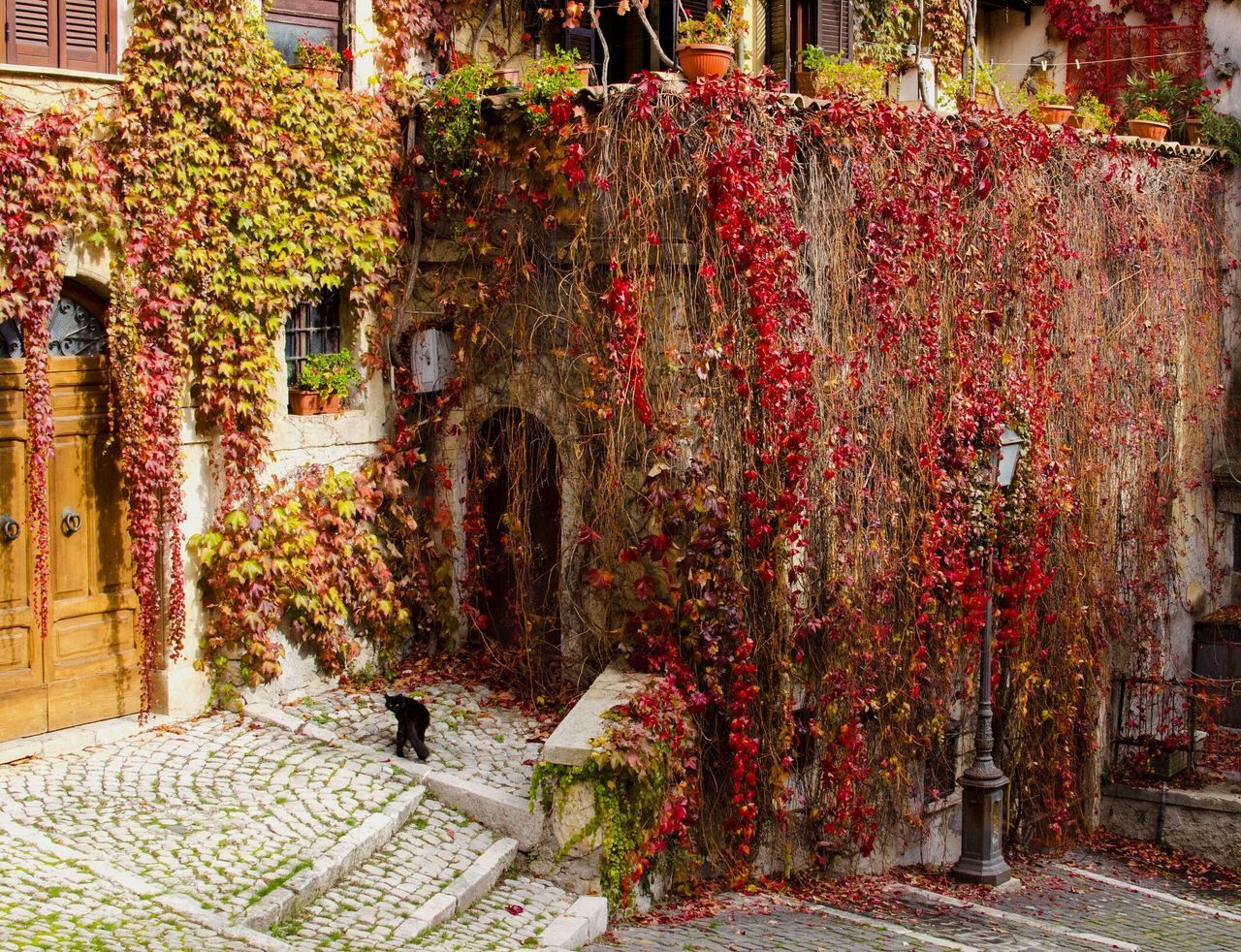abundance, day, flower, outdoors, no people, autumn, multi colored, architecture, tree