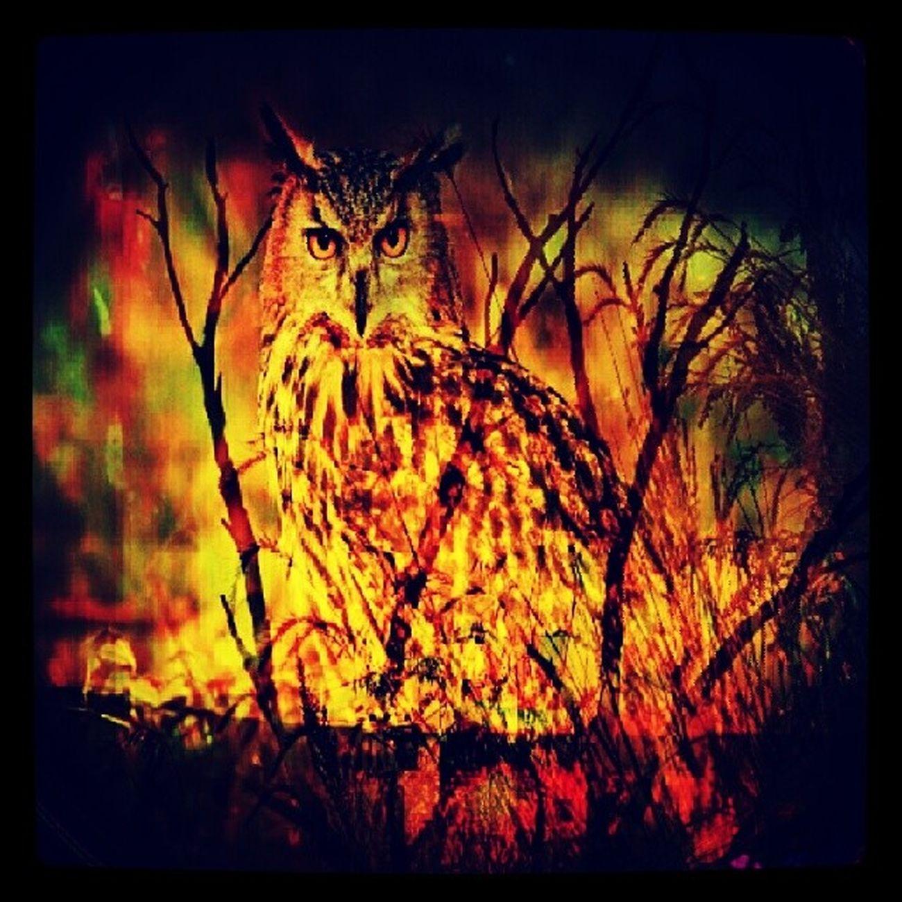 Streamzoofamily Streamzoo ScavengerHuntChallenge SH_Hdr Nature wildlife photography IG_Allstars IG_Nature heyfred_lookatthis allshots_ hashtagfloosie fortheloveofediting MyBest MySecretFascination instamood instagood Ig_daily checkthisout