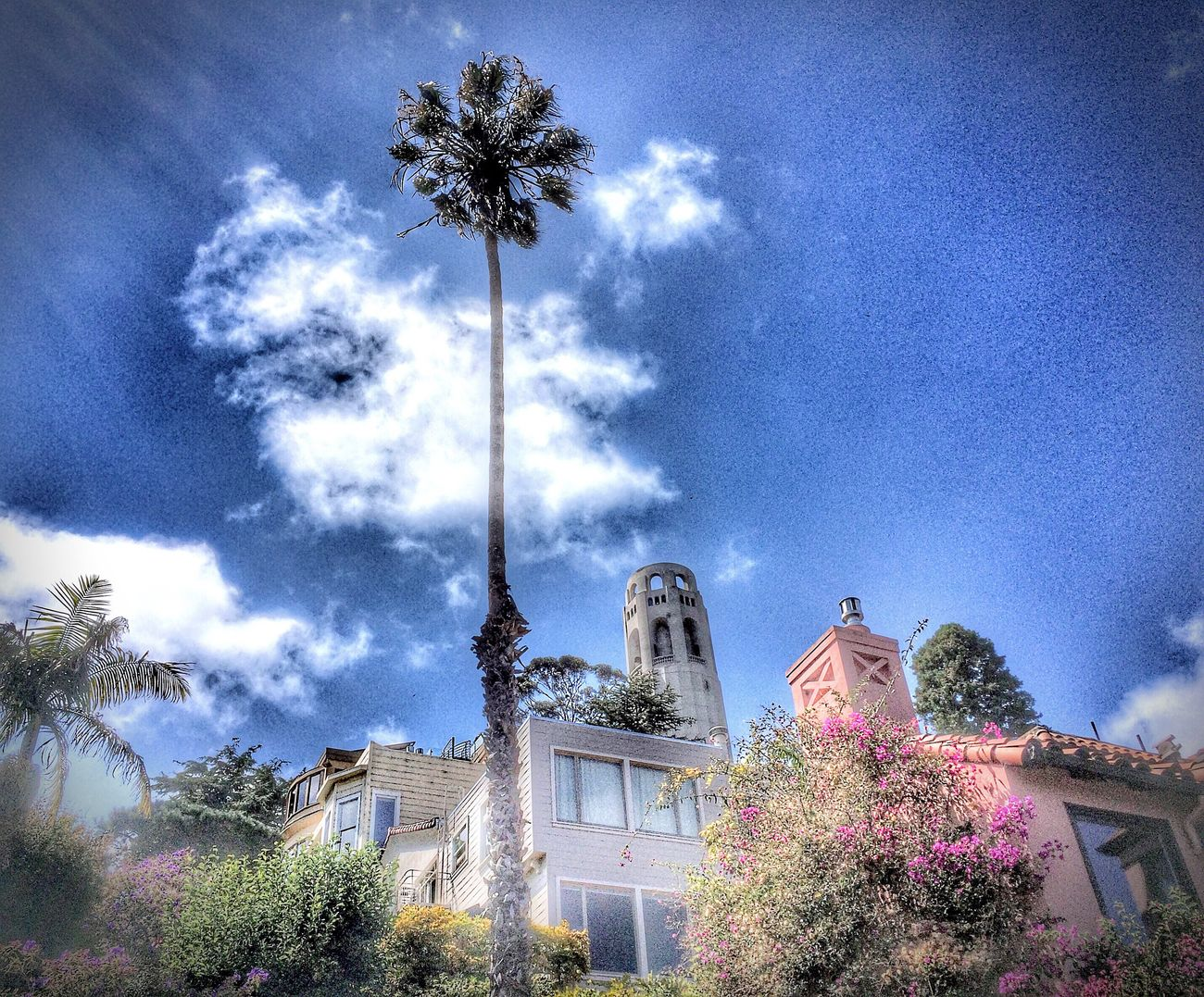 San Francisco Travel Photography Travel Tree Palm Tree Building Exterior