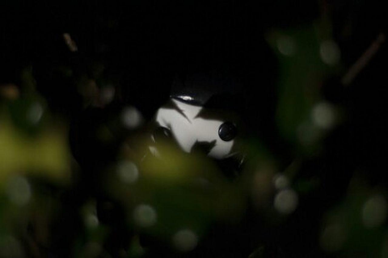 Nikond300 Nikonphotography Popvinyl Adventuretime Adventuretimewithfinnandjake Marceline First Eyeem Photo
