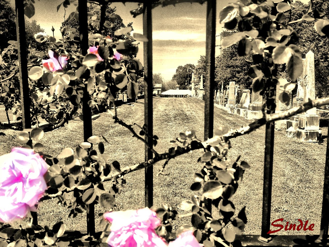 The real death row Cemeteryscape Photo Manipulation Flower Fantasy Dark Art