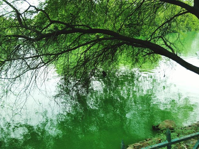 Reflections are the best way to see the world Water Hanging Out Taking Photos Check This Out Hello World Peace Green Color Natural Light Portrait Original Experiences Greenery Reflections Branches Lake No People Beautiful at Hauzkhasvillage in New Delhi